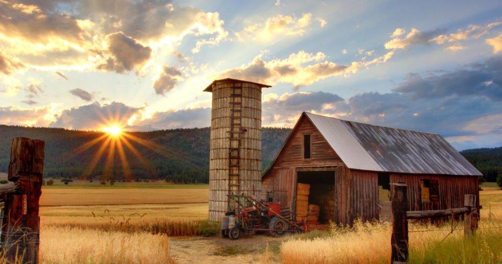 farm-1024x682