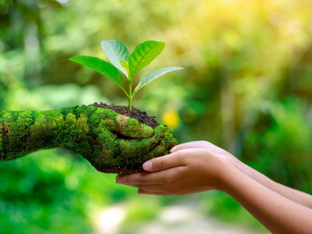 environment-earth-day-hands-trees-growing-seedlings
