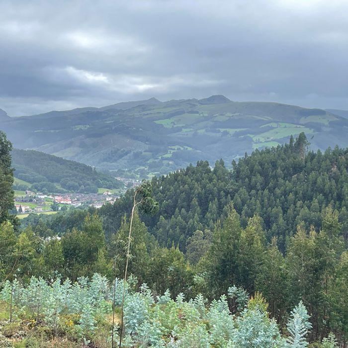 IMG_1264-rolling-hills